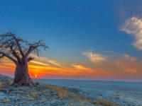 Baobab Sunset at Kubu Island, Botswana.