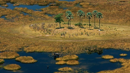 The Okavango delta teems with wildlife.