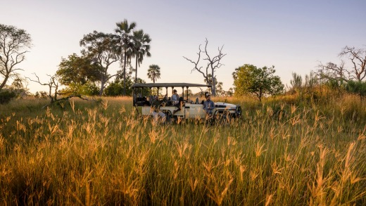 On safari in the Okavango Delta.