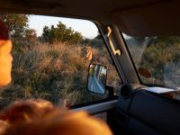 A drive through unfamiliar terrain surrounded by wild animals: The Kalahari Desert, Africa